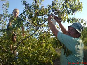 Ringing Cedars. Kin's Settlement