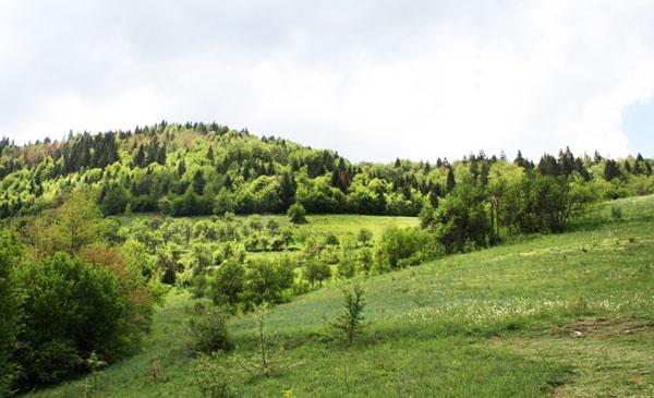 Vladimir Megre. Kins dolmens