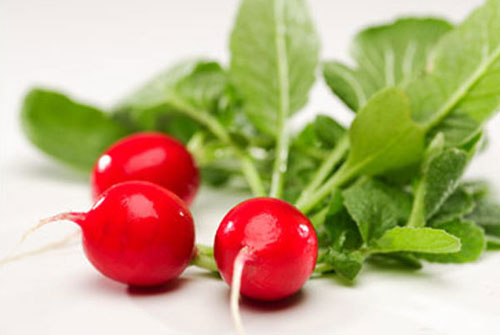 cover crops. radish