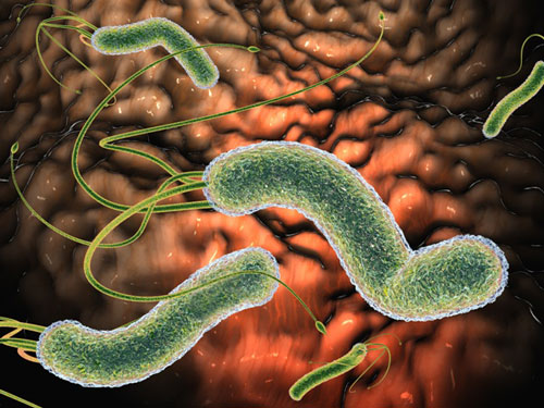Roundworm of humans is the most common nematode parasite of humans